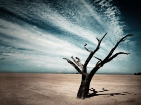 Обои Мрачный пейзаж: Облака, Тень, Дерево, Природа