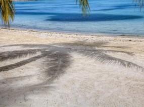 Обои Пляж с пальмами: Пляж, Песок, Пальма, Тень, Природа
