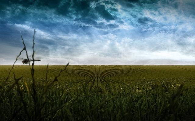 Пасмурное поле