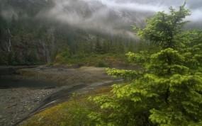 Обои Природа Аляски: Река, Туман, Дерево, Аляска, Природа