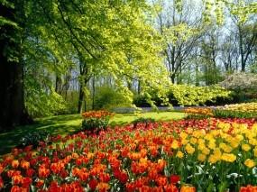 Обои Очарование весны: Деревья, Цветы, Весна, Природа
