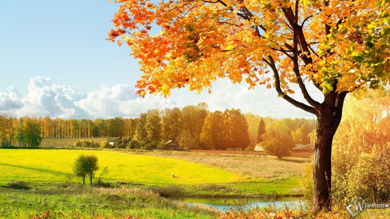 Картинки на раб стол ранняя осень