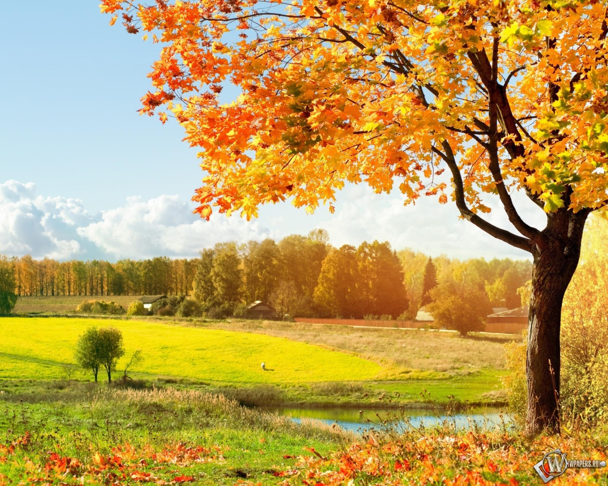 Обои осень золотая природа осень