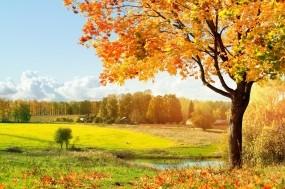 Обои Осень золотая: Природа, Осень, Дерево, Природа