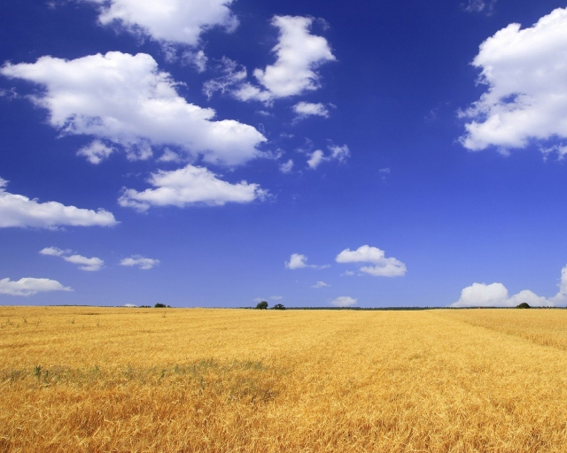 Бескрайнее поле