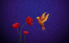Обои Колибри и маки: Рисунок, Маки, колибри, Природа