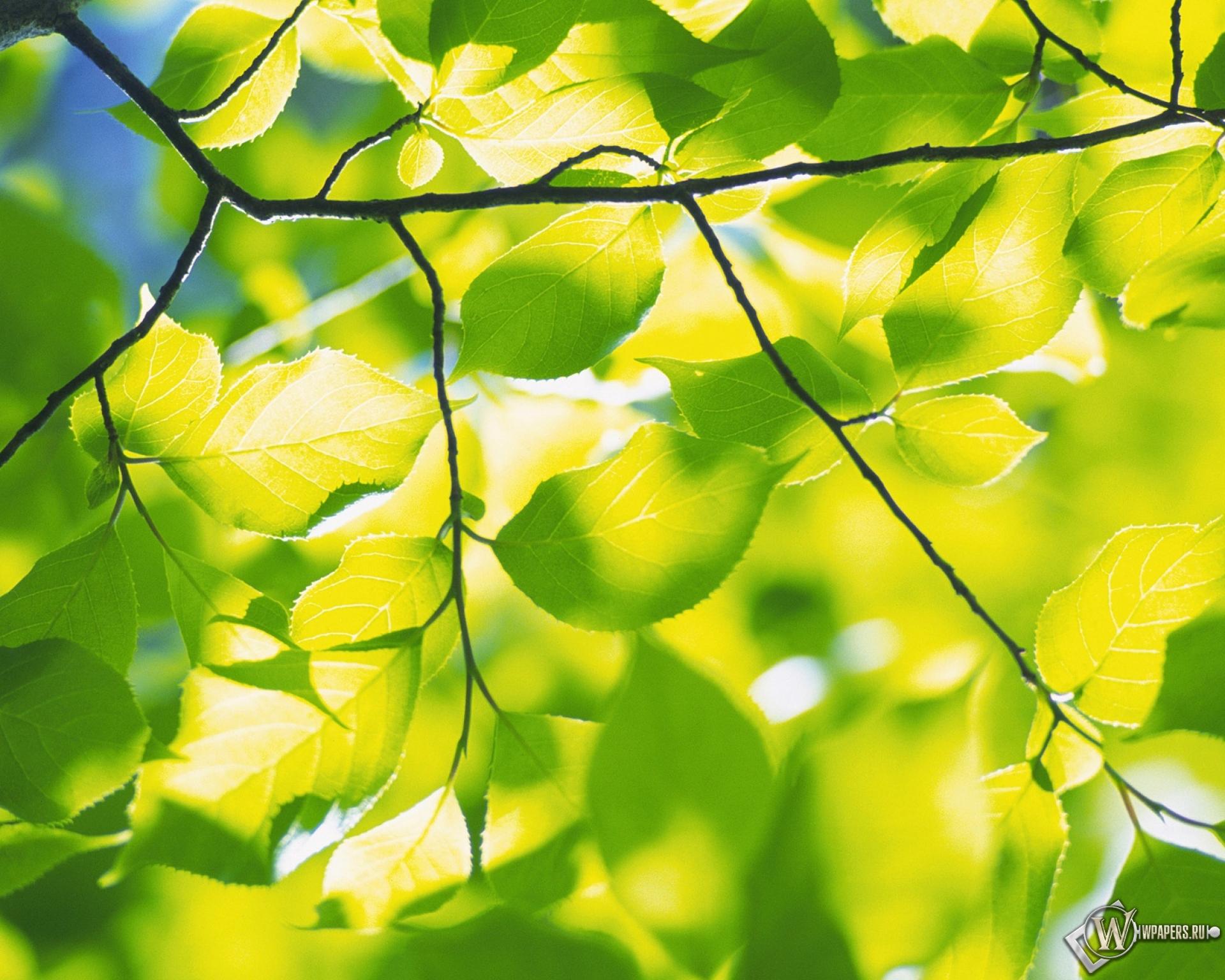 природа листья весна  № 3899920 загрузить