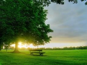 Обои Дерево и скамейка: Дерево, Утро, Скамейка, Природа