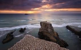 Обои Берег Новой Зеландии: Закат, Берег, Новая Зеландия, Птицы, Природа