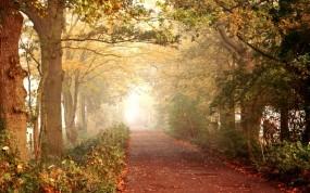 Обои Осенняя тропинка: Дорога, Лес, Деревья, Осень, Листья, Тропинка, Природа