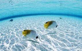 Обои Морские рыбы: Вода, Море, Рыбы, Природа