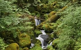 Обои Лесной ручей: Лес, Камни, Ручей, Прочие пейзажи