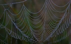 Обои Роса на паутине: Роса, Паутина, Природа