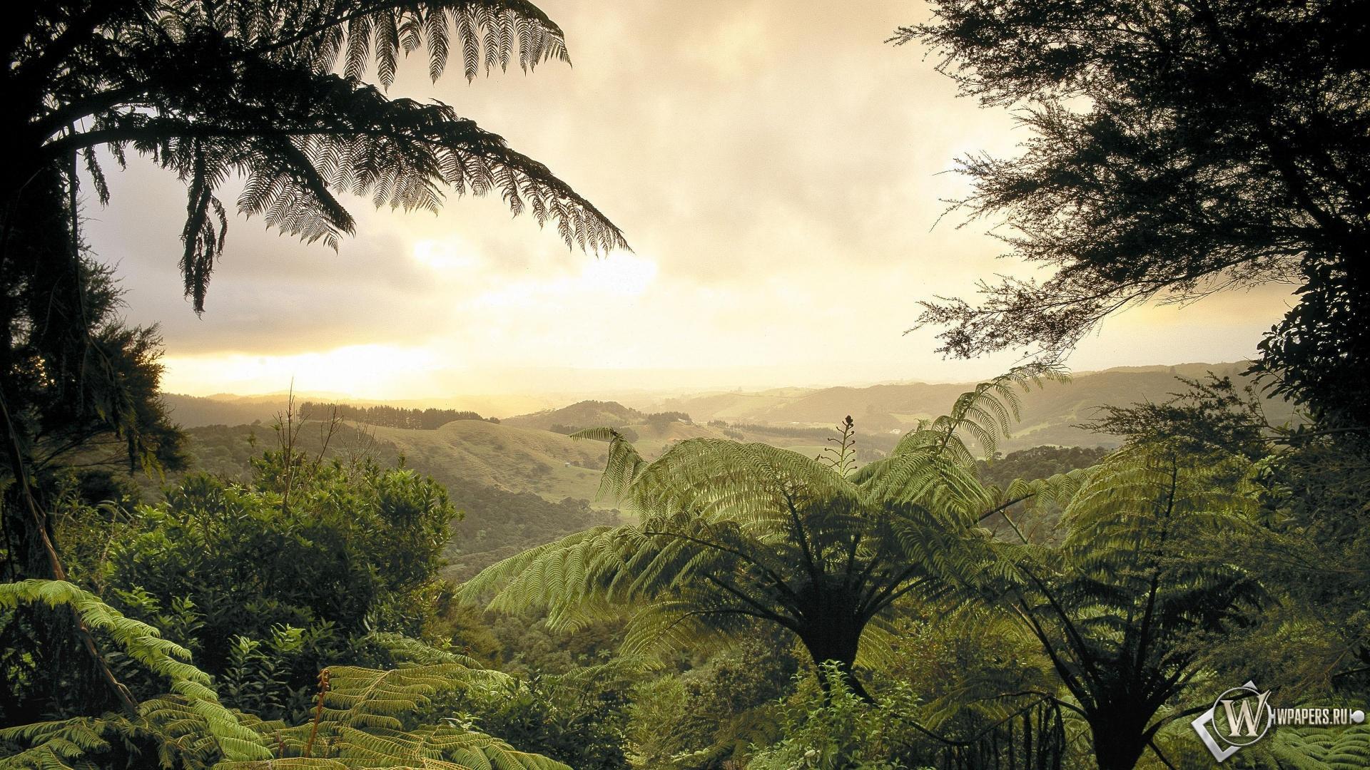 фотообои тропики: