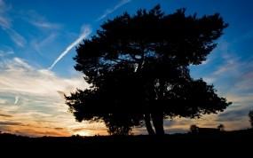 Обои Деревья на закате: Закат, Дерево, Небо, Природа