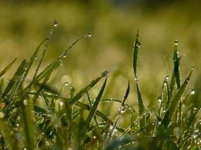 Обои Роса на траве: Роса, Трава, Лето, Утро, Природа