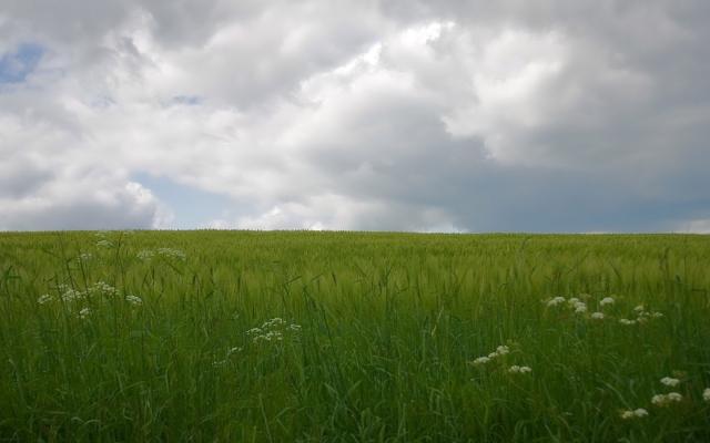 Дождь на поле