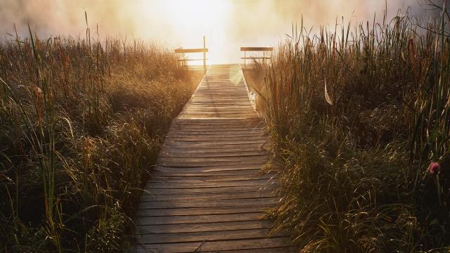 Мост в траве