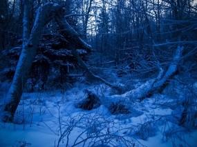 Обои Синий лес: Зима, Лес, Синий, Природа