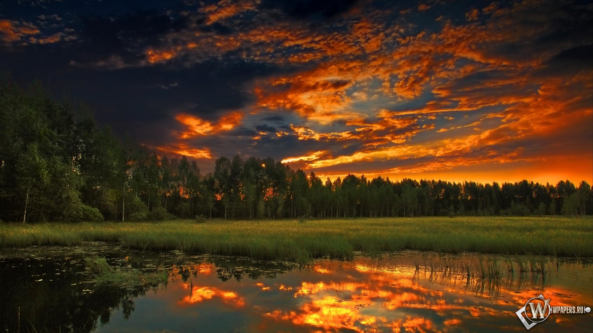 Фото летний лес