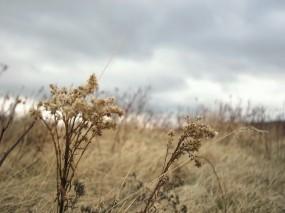Обои Степь: Осень, Трава, Степь, Природа