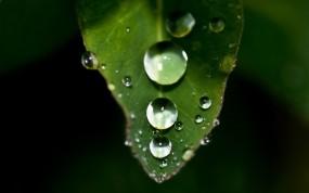 Обои Капли на листе: Зелень, Капли, Лист, Природа
