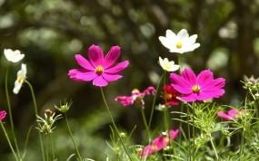Обои Весенние цветы: Поле, Цветы, Весна, Природа