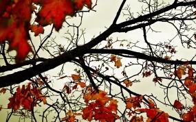 Обои Красная осень: Деревья, Осень, Небо, Листья, Оранжевый, Осень