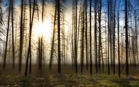 Обои Ранняя весна: Деревья, Солнце, Туман, Утро, Природа