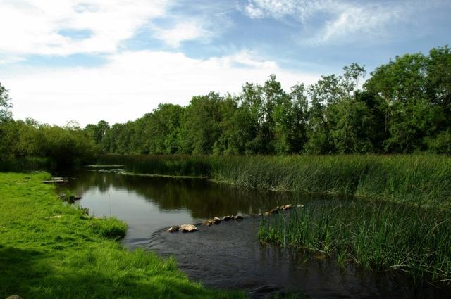 Зелёная река