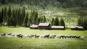 Обои Табун лошадей: Деревья, Природа, Лошадь, Пейзаж, Природа