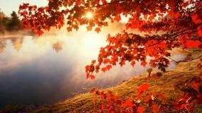 Обои Красная осень: Деревья, Солнце, Озеро, Осень, Листья, Природа