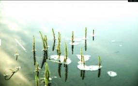Обои Пруд: Зелень, Вода, Пруд, Природа