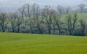 Обои Весеннее поле: Зелень, Лес, Деревья, Поле, Трава, Весна, Луг, Природа