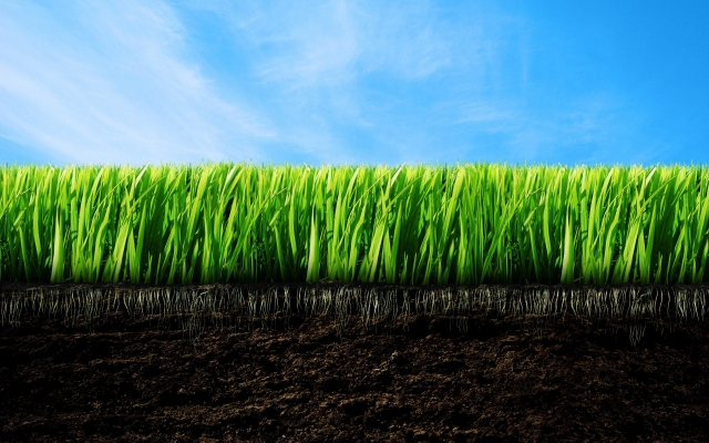 Трава и земля