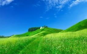 Обои Красивый луг: Зелень, Небо, Луг, Природа