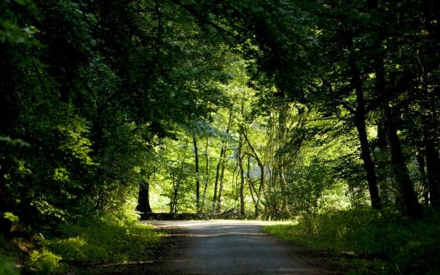 Картинки природа дорога в лесу