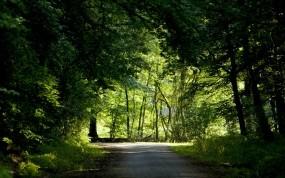 Обои Дорога в лесу: Дорога, Лес, Деревья, Природа