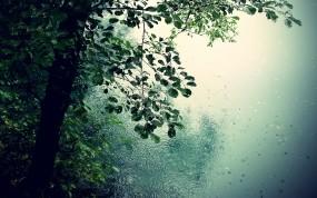 Обои Дождь в лесу: Лес, Деревья, Романтика, Дождь, Природа