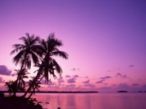 Обои Сиреневый закат: Пальмы, Море, Закат, Природа