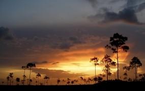 Обои Деревья на закате: Облака, Деревья, Закат, Небо, Природа