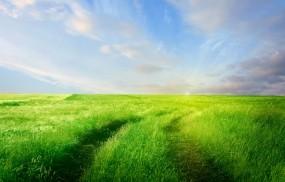 Обои Горизонт: Зелень, Дорога, Поле, Трава, Небо, Горизонт, Природа