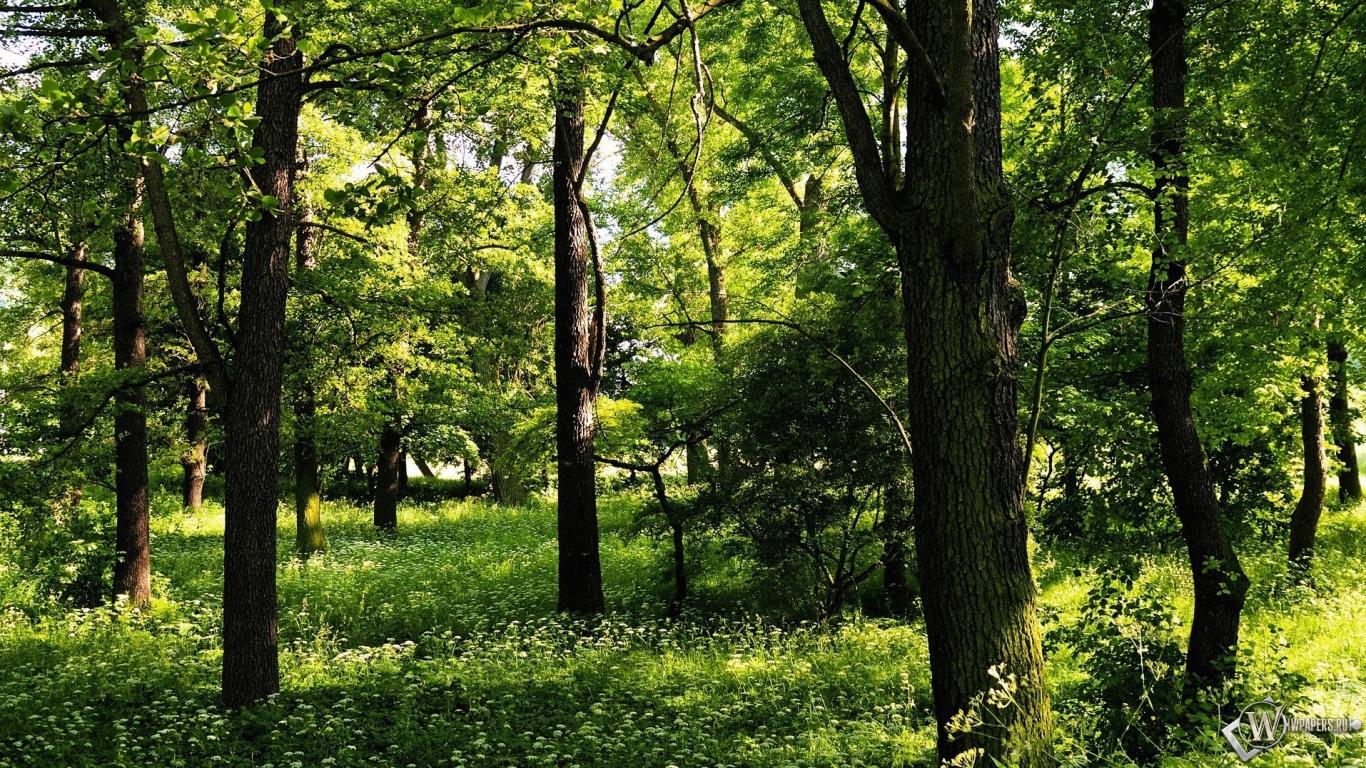 Картинки лес летом для рабочего стола
