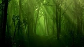Обои Лес и ручей: Свет, Лес, Деревья, Ручей, Природа