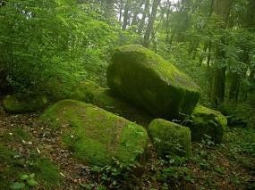 Обои Мох на камнях: Лес, Камни, Мох, Природа