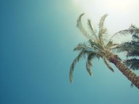 Обои Пальмы: Пальмы, Солнце, Небо, Лето, Прочие пейзажи