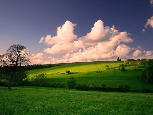 Весенний луг