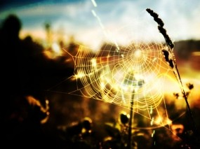 Обои Паутина: Солнце, Паутина, Природа