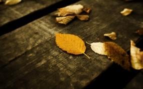 Обои Осенние листья: Осень, Листья, Желтый, Природа