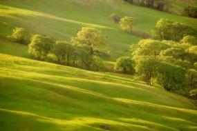 Обои Весна пришла: Зелень, Деревья, Трава, Склон, холм, Природа
